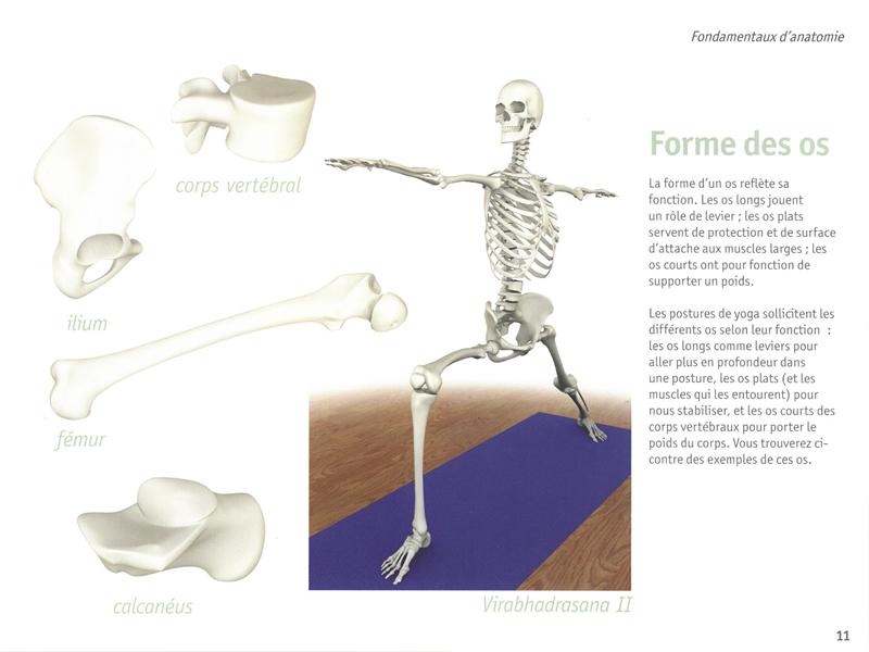 Anatomía Yoga - Los músculos | Chin Mudra SAS | Francia | Accesorios ...