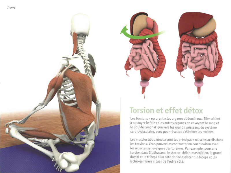 Yoga Anatomy - The Muscles | Chin Mudra SAS | France | Yoga Accessories