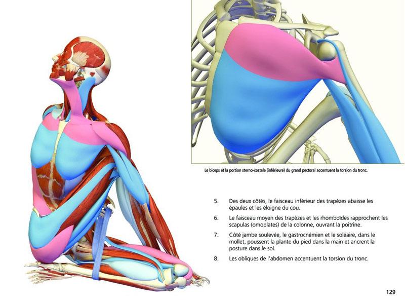 Anatomía Yoga - Las posturas   Chin Mudra SAS   Francia   Accesorios ...
