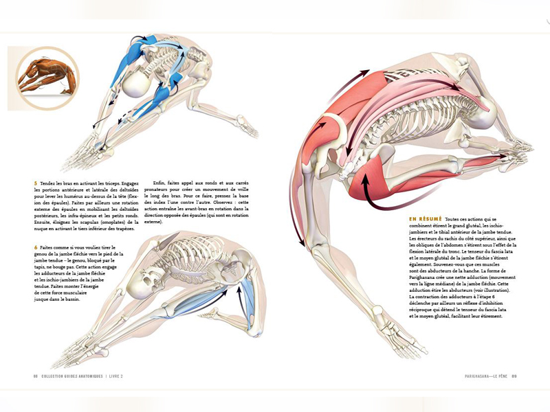 Anatomy Of The Hips And Flexions Chin Mudra Sas France Yoga