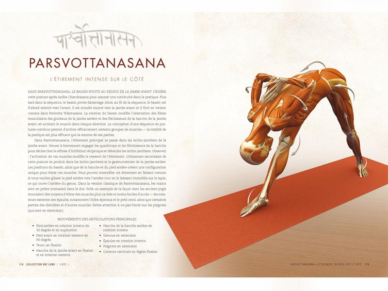 Anatomy of Standing Postures and Vinyasa | Chin Mudra SAS | France ...